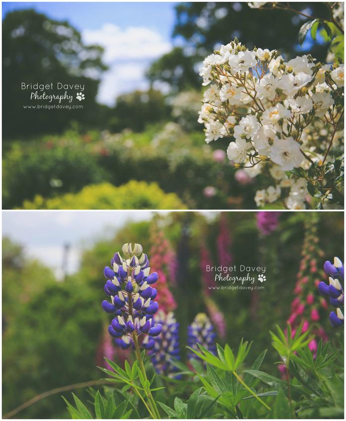 Woburn Abbey Garden Show 2015   Garden Photography Course1