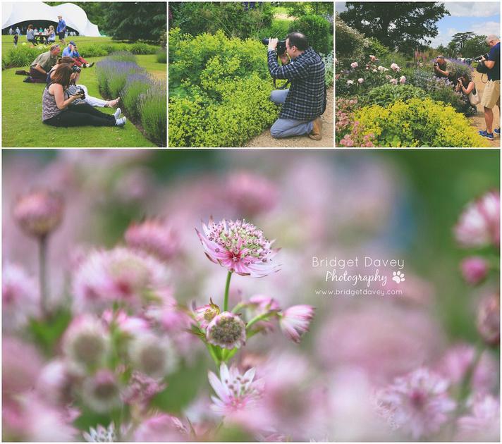 Woburn Abbey Garden Show 2015   Garden Photography Course5