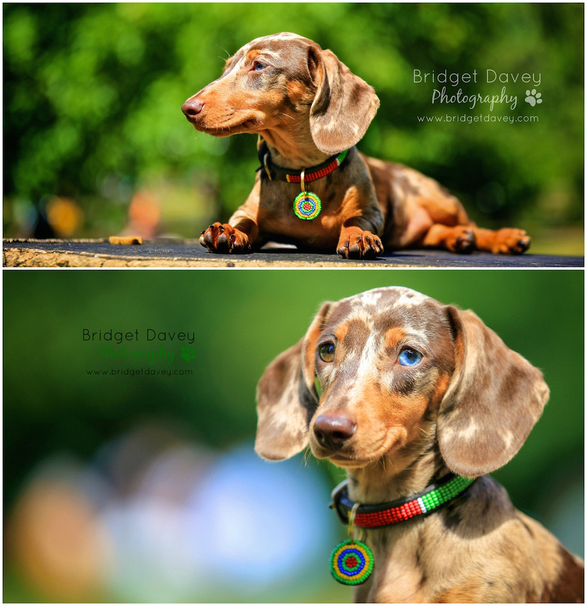 Indie | London Dog Photography 22