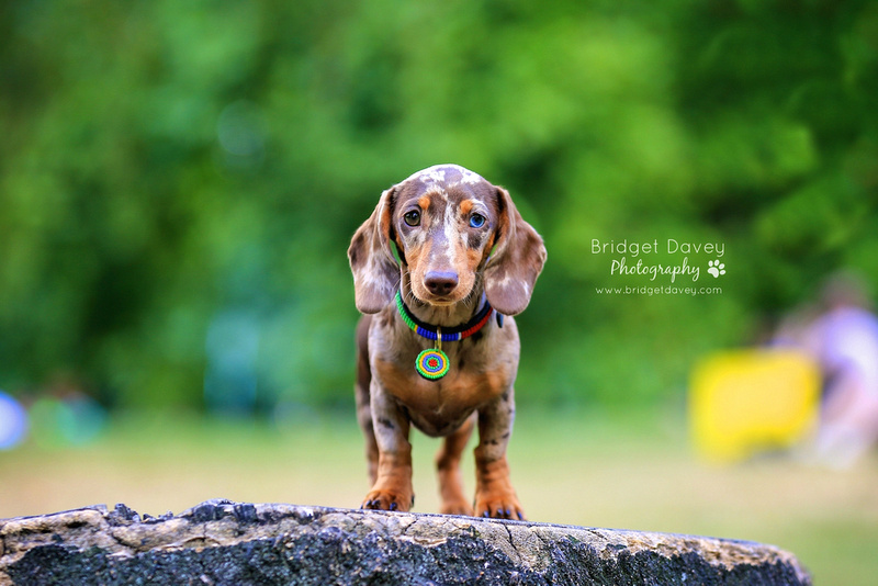 Indie | London Dog Photography 20