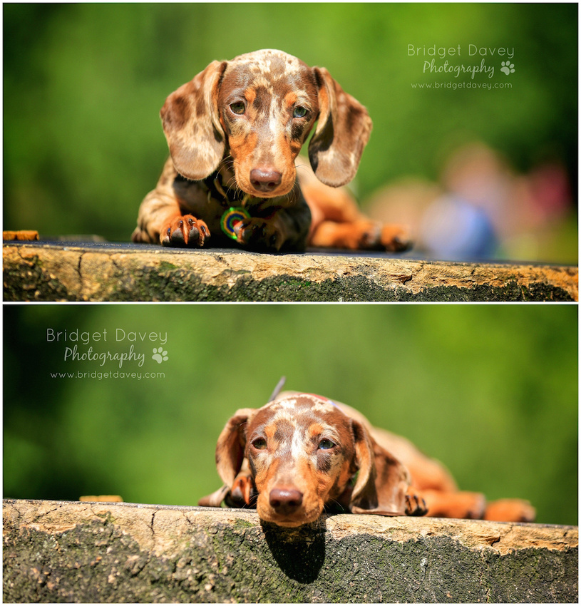 Indie | London Dog Photography 23