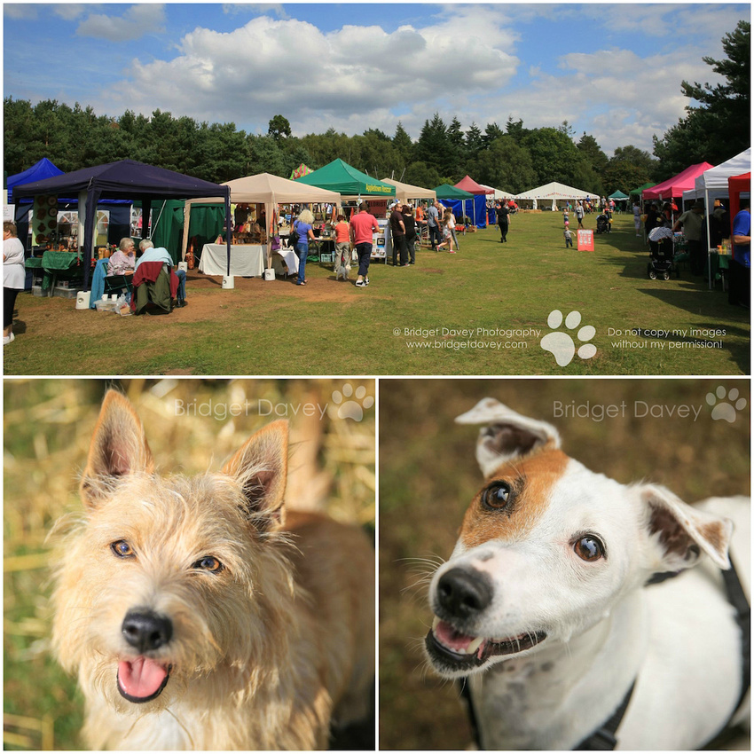 Rushmere Dog Show & Summer Fayre, August 2015