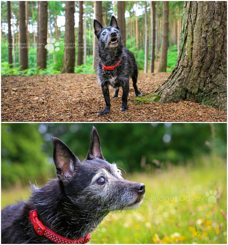 Pip & Sophie | Dog Photography London and Bedfordshire2