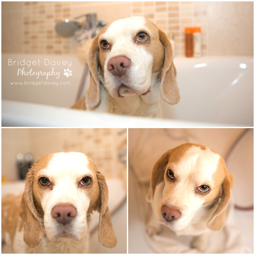 The Beagles   Whiffy Dog Soap Review