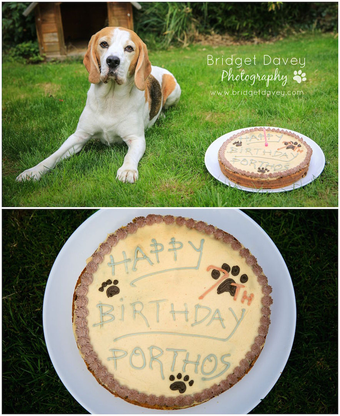 Porthos Barkday Party | Dog Photography London and Bedfordshire
