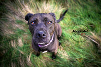 Millie | HULA Animal Rescue