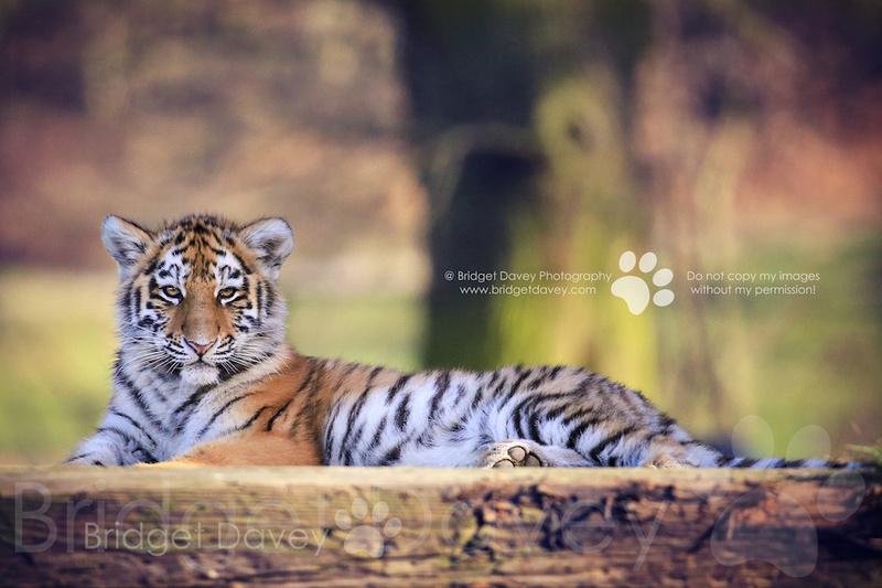 Woburn Safari Park | Woburn, Bedfordshire15