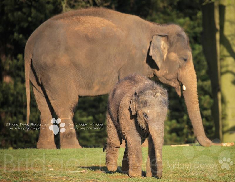 Woburn Safari Park | Woburn, Bedfordshire11