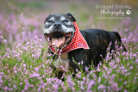 Seamus | Dog Photography Bedfordshire & London