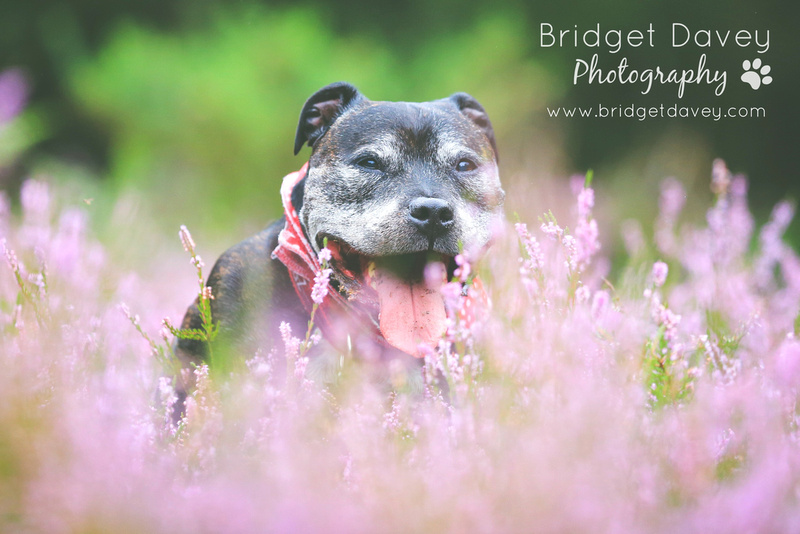 Seamus | Dog Photography Bedfordshire & London