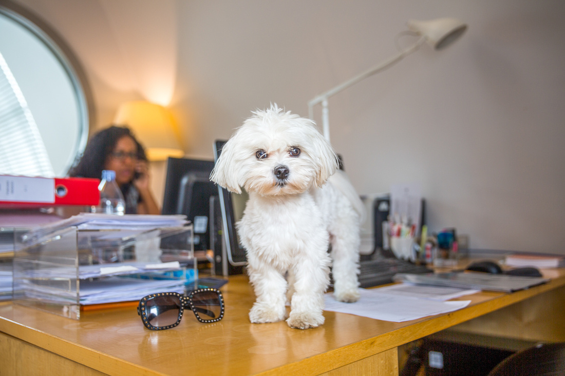Bring your Dog to Work Day 2017  - BYDTWD