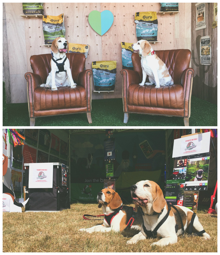 Dog Fest Knebworth 2017 | Dog Photography Knebworth, Hertfordshire