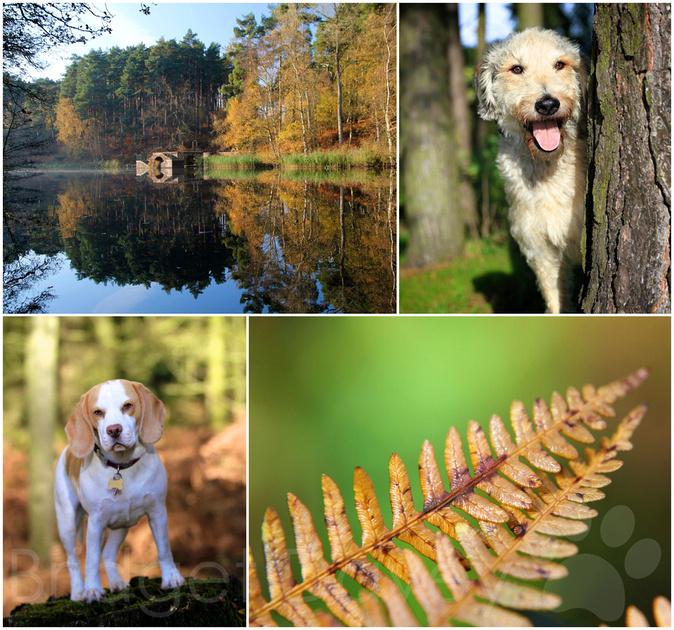 Pet Photography Leighton Buzzard | Bedfordshire