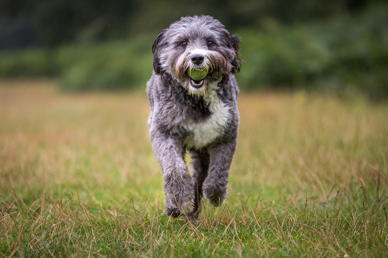 Bonnie & Sophie   Dog Photography Bedfordshire