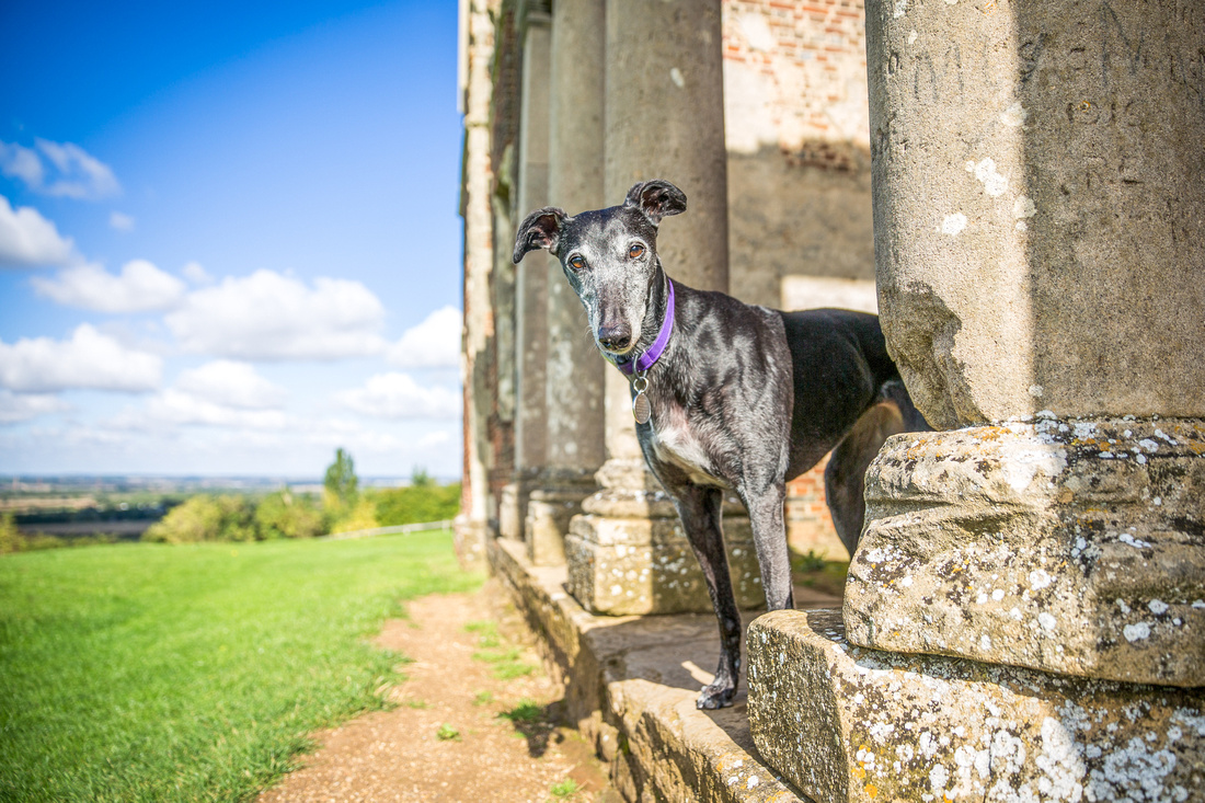 Nicola | Dog Photography Bedfordshire