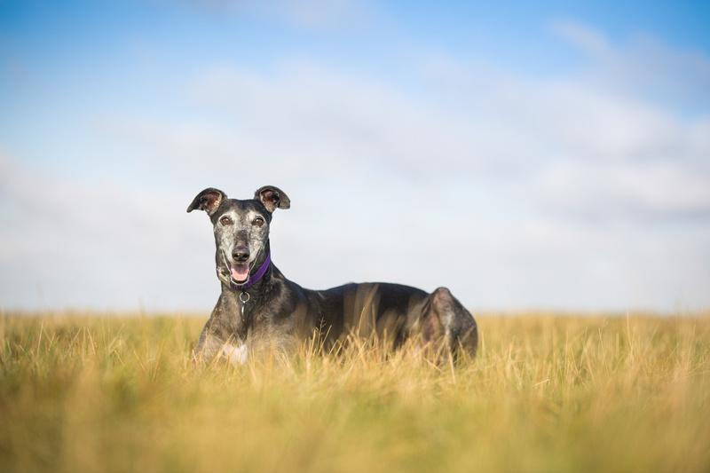 Nicola   Dog Photography Bedfordshire