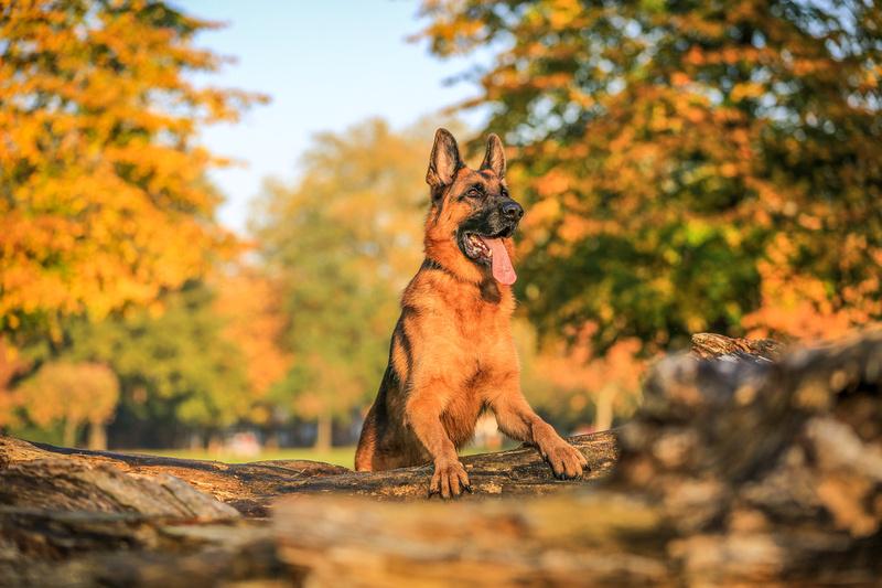 Finn   London Dog Photography