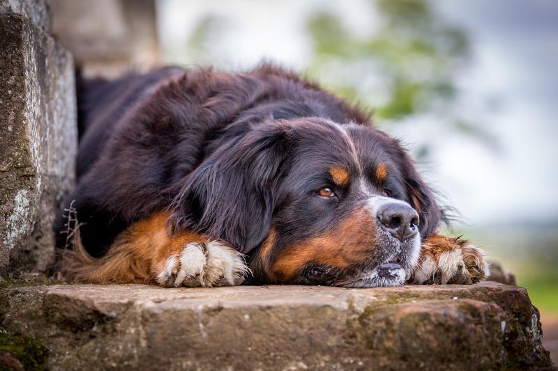 Berkley | Dog Photography Ampthill, Bedfordshire