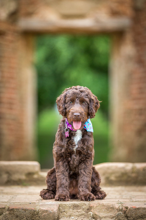 Holly -Dog Photography Ampthill, Bedfordshire