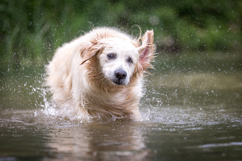 Millie - Dog Photography Buckinghamshire
