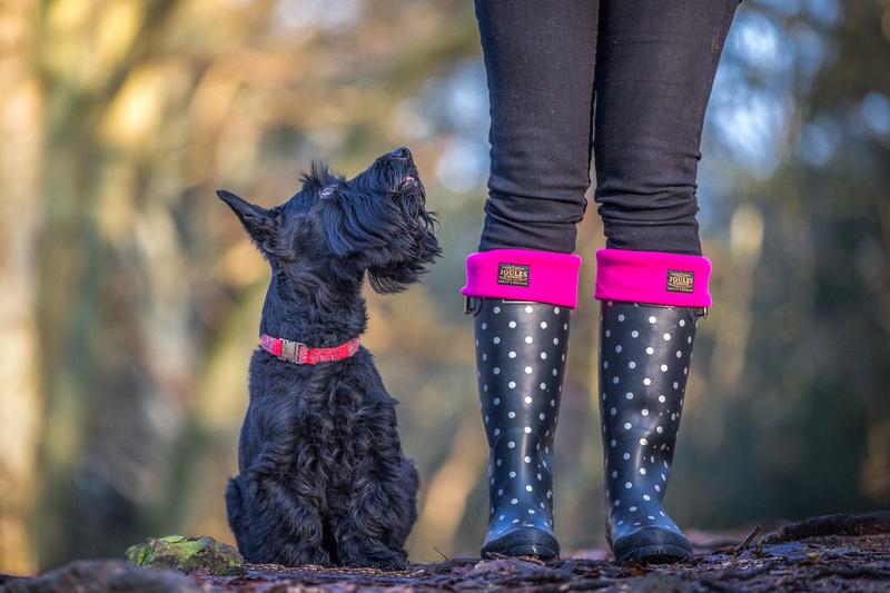 Frazer | Dog Photography Woburn Bedfordshire