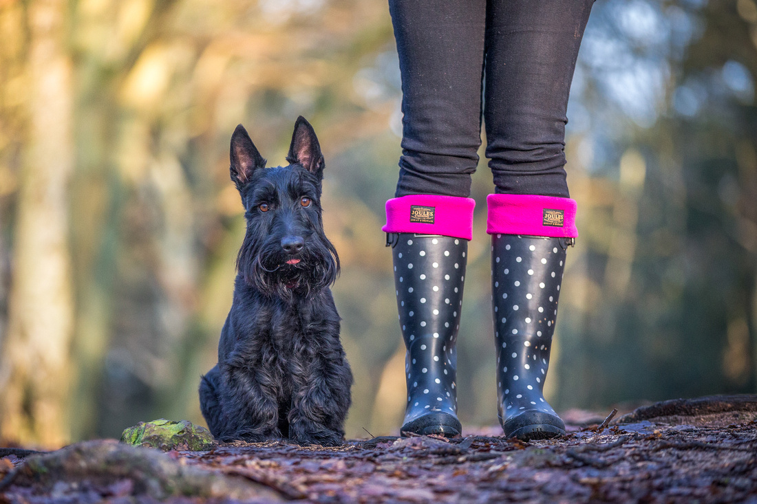 Frazer | Dog Photography Woburn Bedfordshire