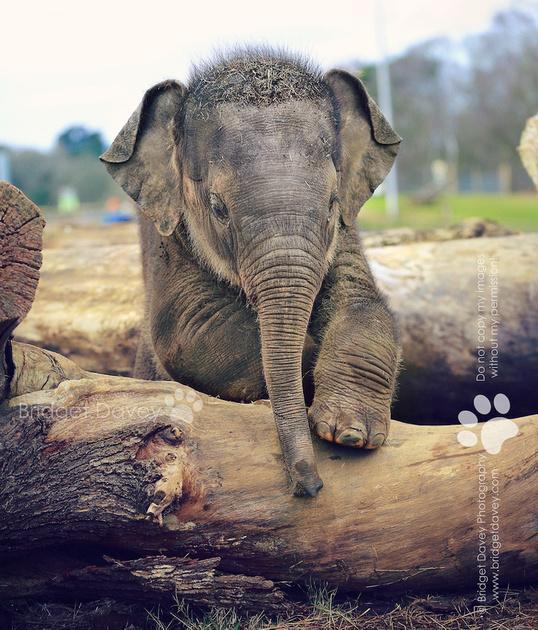 Woburn Safari Park | Woburn, UK10