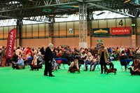 "Crufts 2015 ""Terrier and Hounds"""