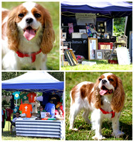 Rushmere Summer Fayre and Dog Show 2012