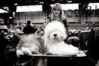 "Crufts 2013 Day 4 ""Working and Pastoral"""