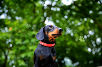 London Dog Photography | Professional Photos of your Dog in and around London, Bedfordshire, Buckinghamshire, Hertfordshire