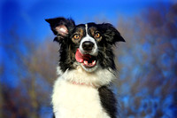 Dog Photography Bedfordshire | Pet Photography Bedfordshire