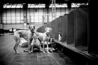 "Crufts 2014 ""Terrier and Hound"""