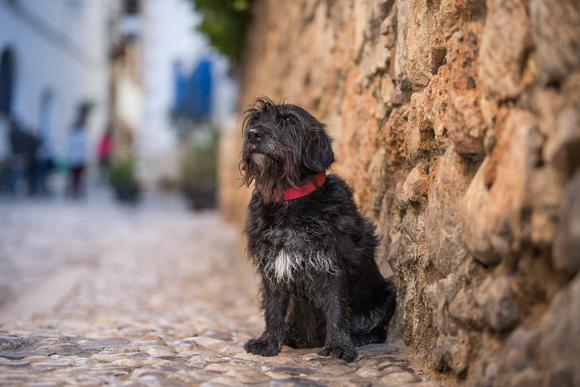 Barkelona | Sitges