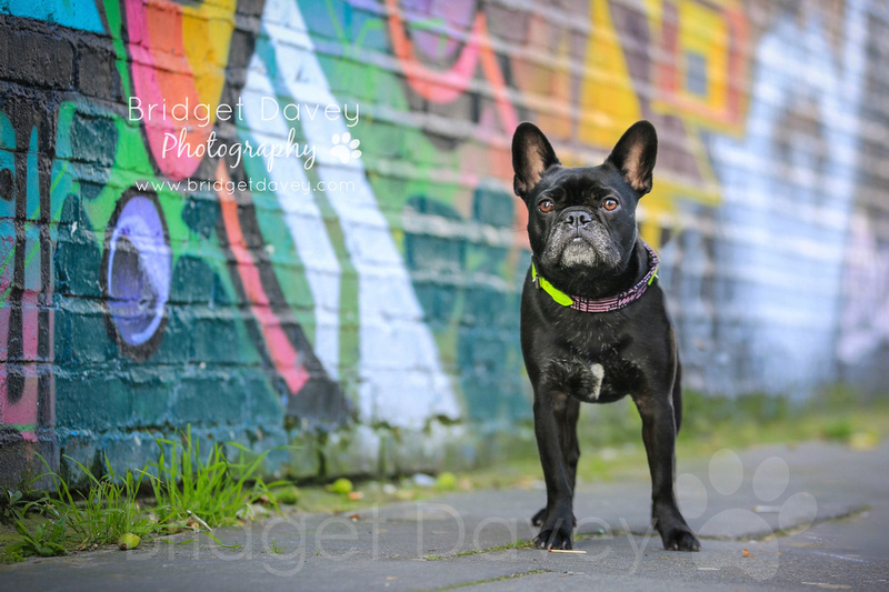Marlene | London Dog Photography