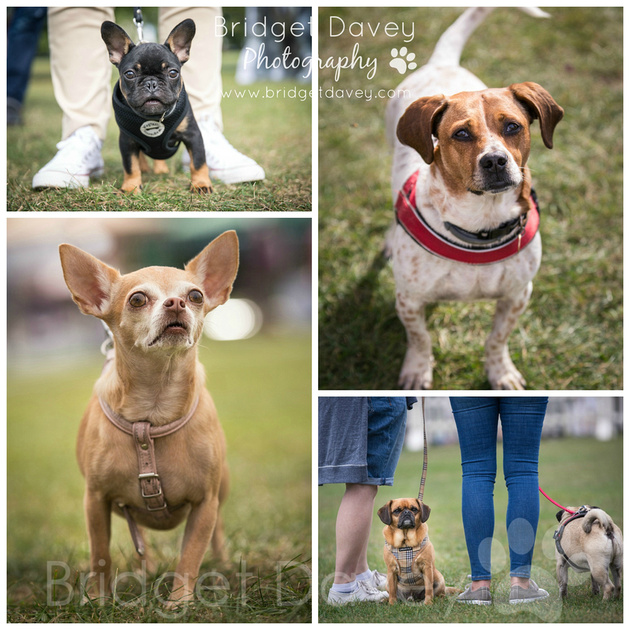 Pup Aid 2016 | Dog Photography London