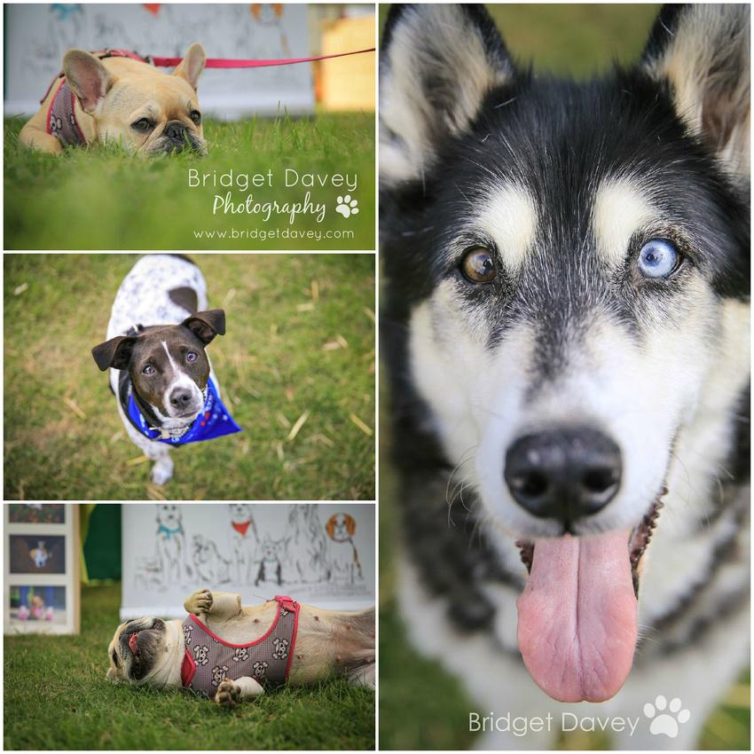 Bridget Davey Photography Hula Dog Show September 2015
