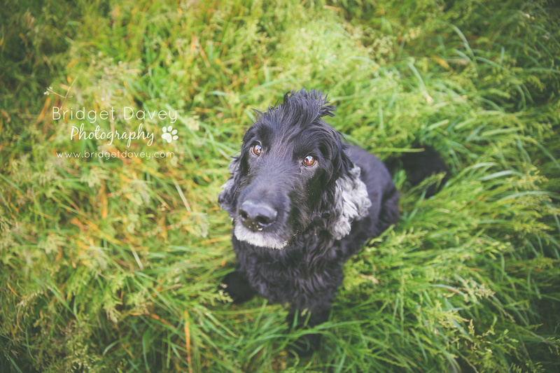 Buddy | Dog Photography | Professional Photos of your Dog in and around London, Bedfordshire, Buckinghamshire, Hertfordshire 3
