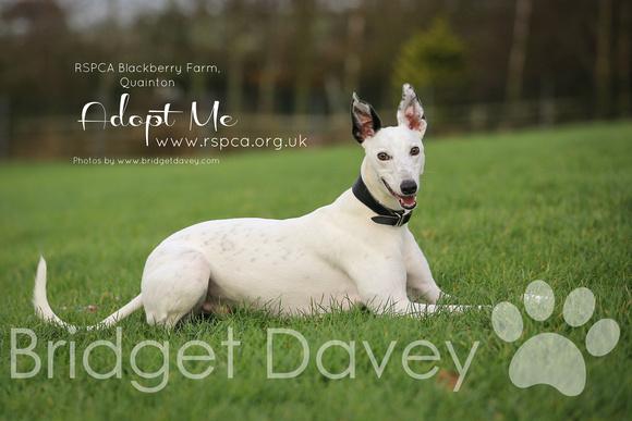 Bridget Davey Photography | RSPCA Blackberry Farm | Adopt Me