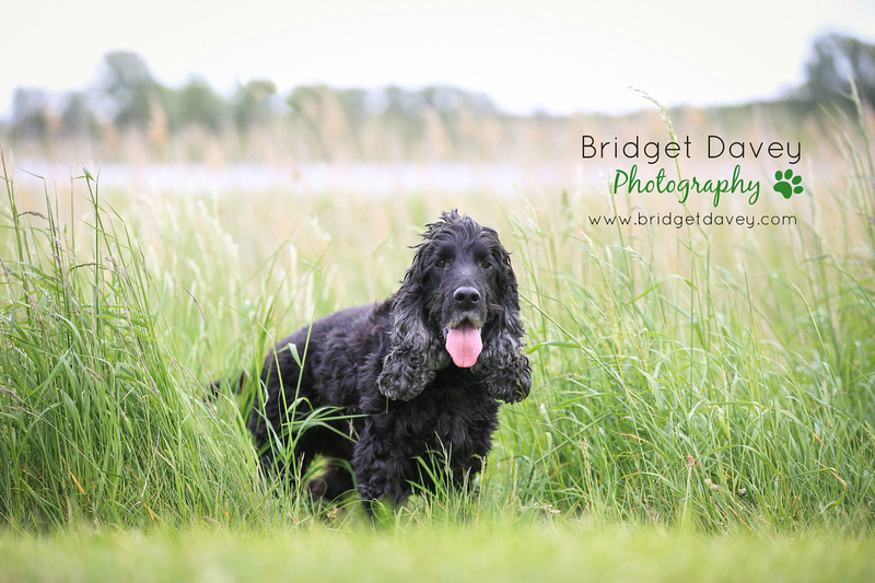 Buddy | Dog Photography | Professional Photos of your Dog in and around London, Bedfordshire, Buckinghamshire, Hertfordshire 2