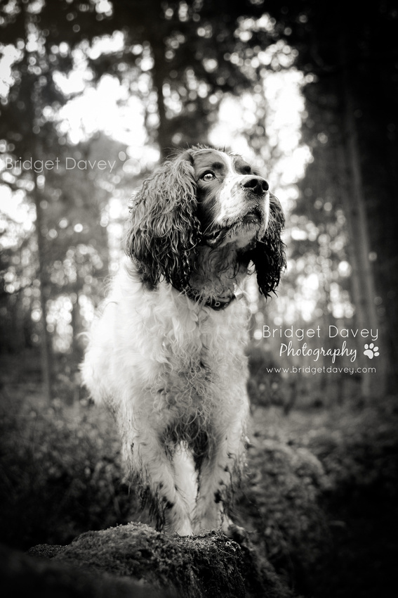 Freckles | Dog Photography Bedfordshire