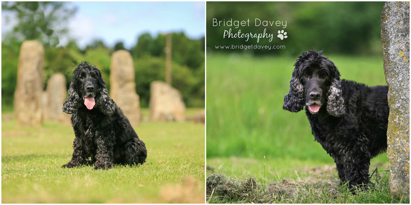 Buddy | Dog Photography | Professional Photos of your Dog in and around London, Bedfordshire, Buckinghamshire, Hertfordshire 6