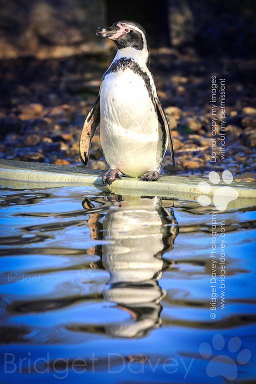 Woburn Safari Park | Woburn, Bedfordshire19