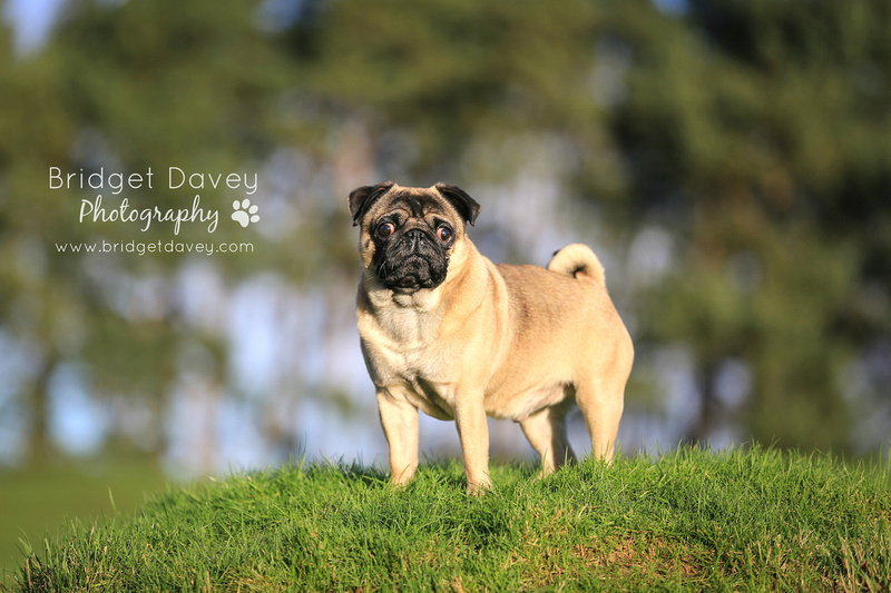 Milo | Dog Photography Ampthill, Bedfordshire5