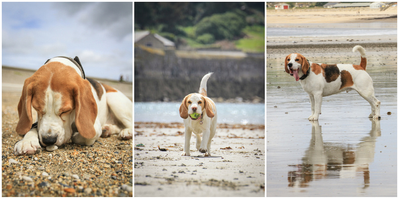 The Beagles in Cornwall
