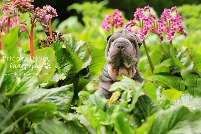 Beau   Dog & Pet Photography London