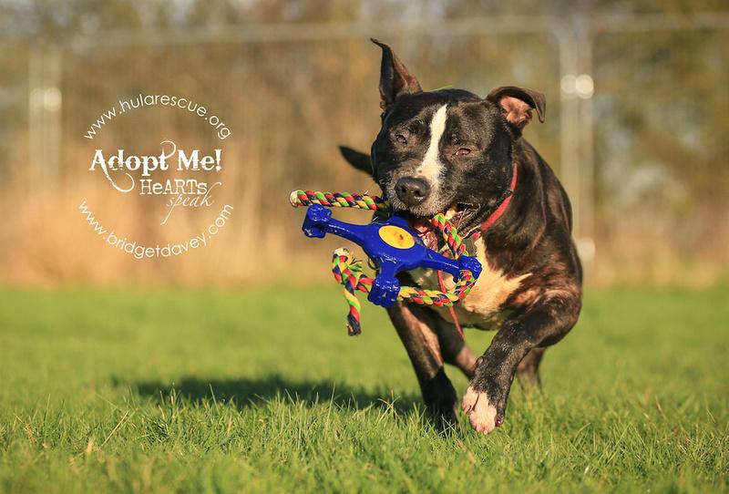 Bruce | HULA Animal Rescue