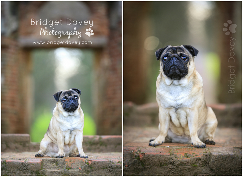 Milo | Dog Photography Ampthill, Bedfordshire3