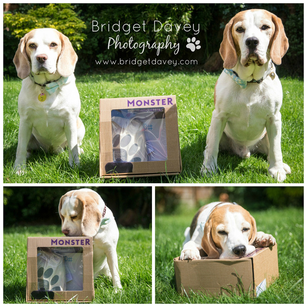 The Beagles | London Dog Photography