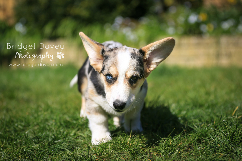 Oliver | Dog Photography Leighton Buzzard, Bedfordshire